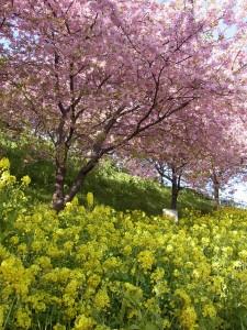 春を満喫~♪お花だより