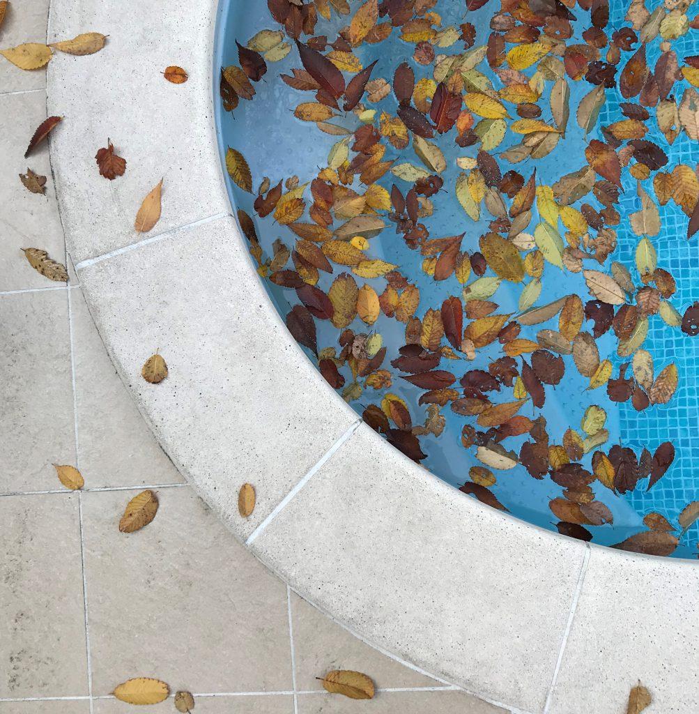 青と落ち葉のコントラストが美しいー