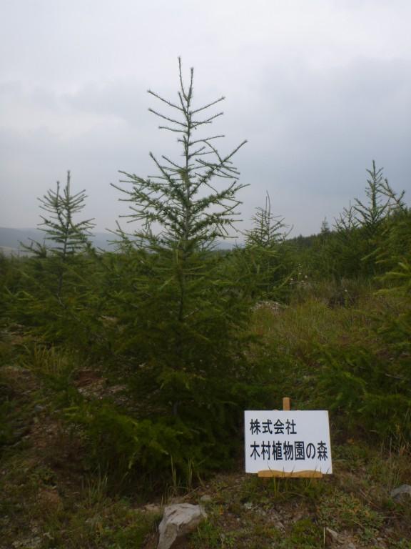 武川 木村植物園の森