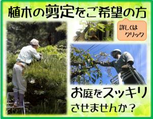 木村植物園BLG