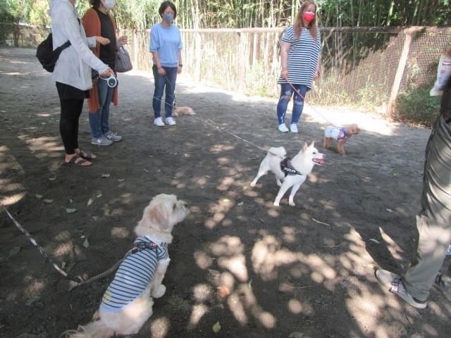 集中する犬たち