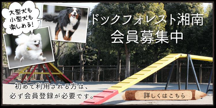 大型犬も小型犬も楽しめる!ドッグフォレスト湘南会員募集中。初めて利用される方は、必ず会員登録が必要です。詳しくはこちら