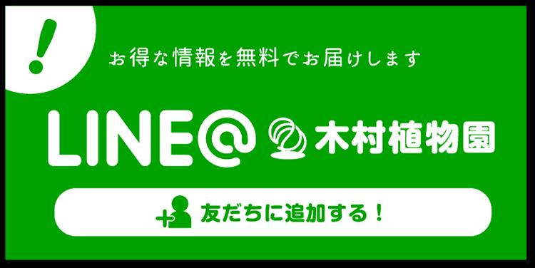 LINE@木村植物園。お得な情報を無料でお届けします