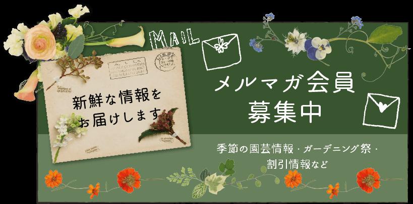 メルマガ会員募集中。季節の園芸情報・ガーデニング祭・割引情報など、新鮮な情報をお届けします