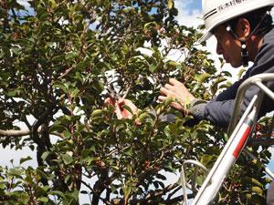 写真:植木のメンテナンス作業