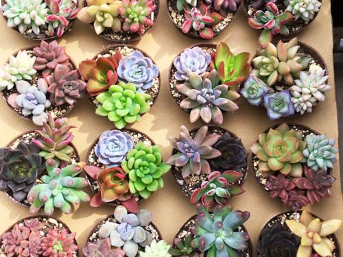 写真:多肉植物の寄せ植え