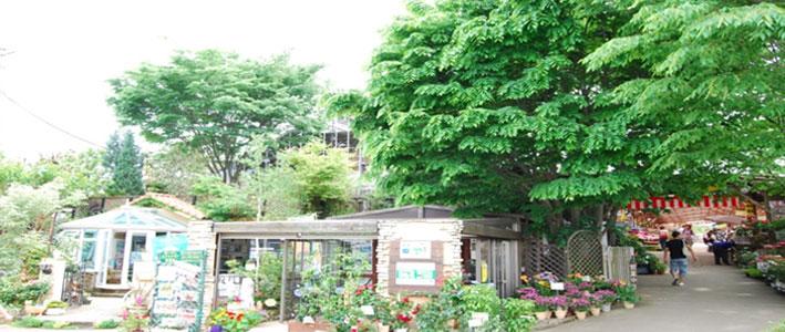 写真:木村植物園内1